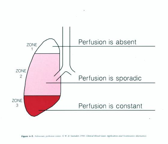 Ventilation Perfusion Ratio : Ventilation perfusion relationships