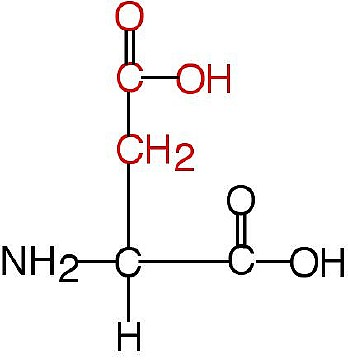 l aspartic acid  Aspartic Acid